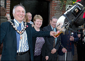 Cllr Geoff Acton offering a drink to Shire Horse 'Griffin'